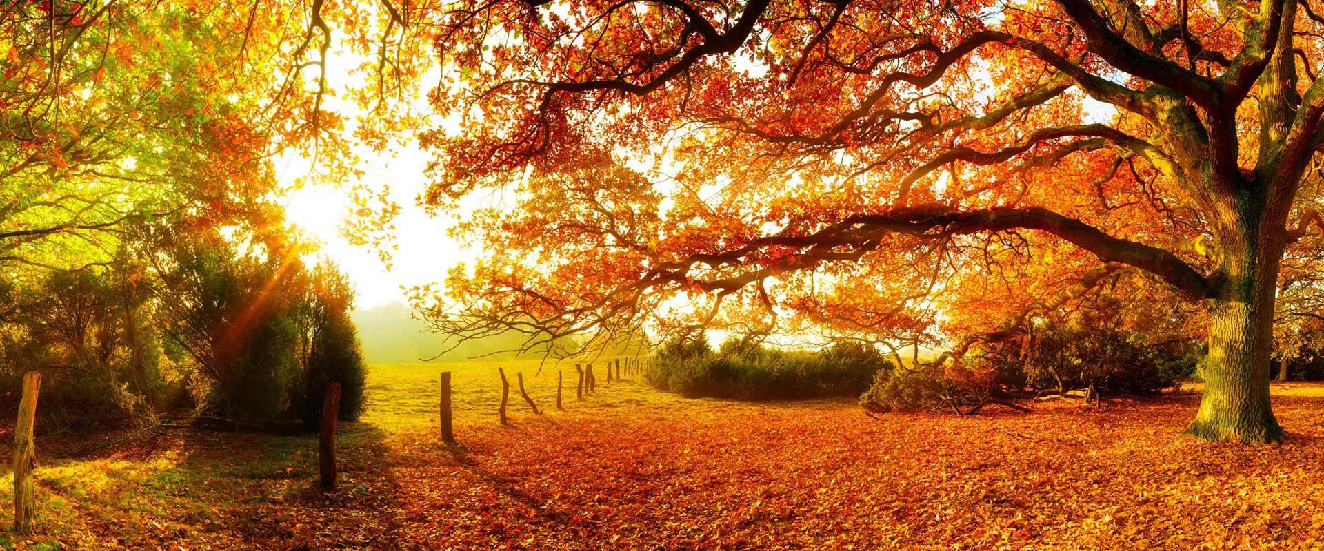 Die Farbenpracht des Herbstes