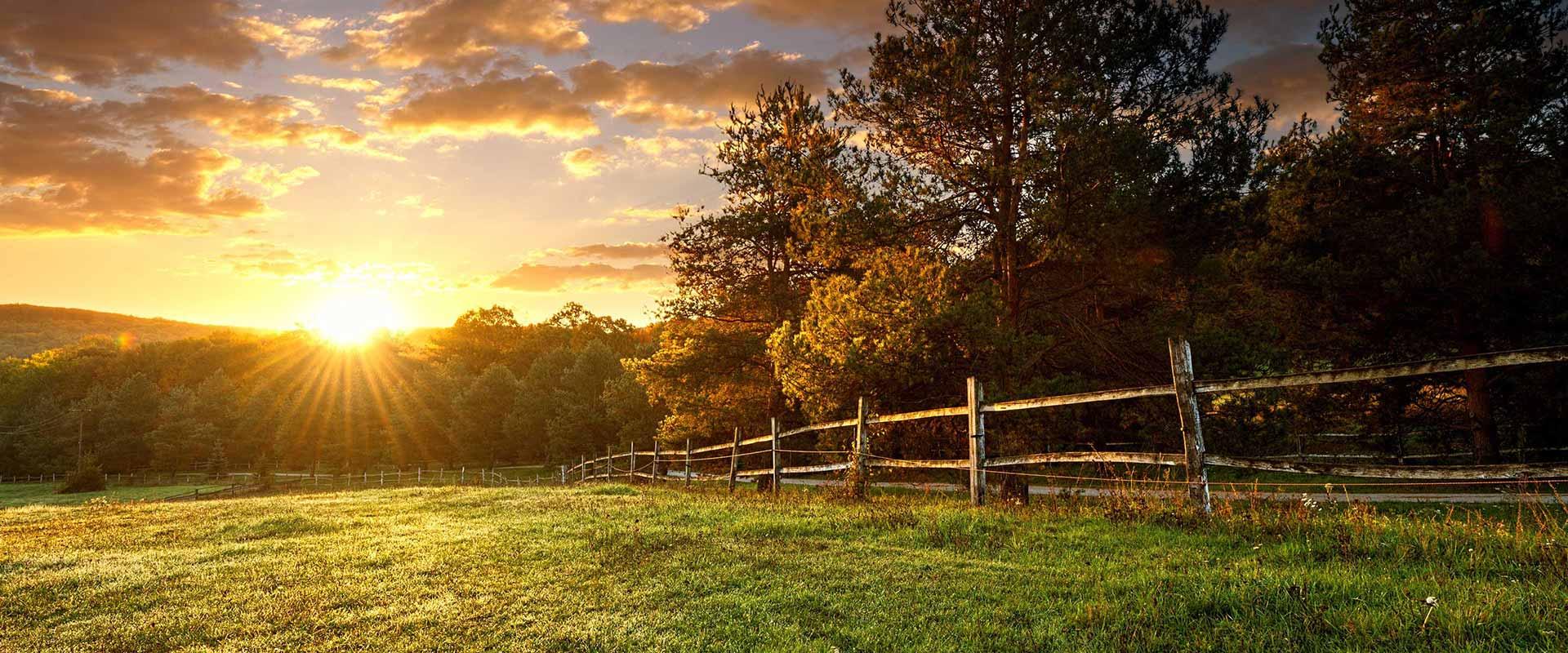 Sonnenuntergang über einer Weide am Waldrand